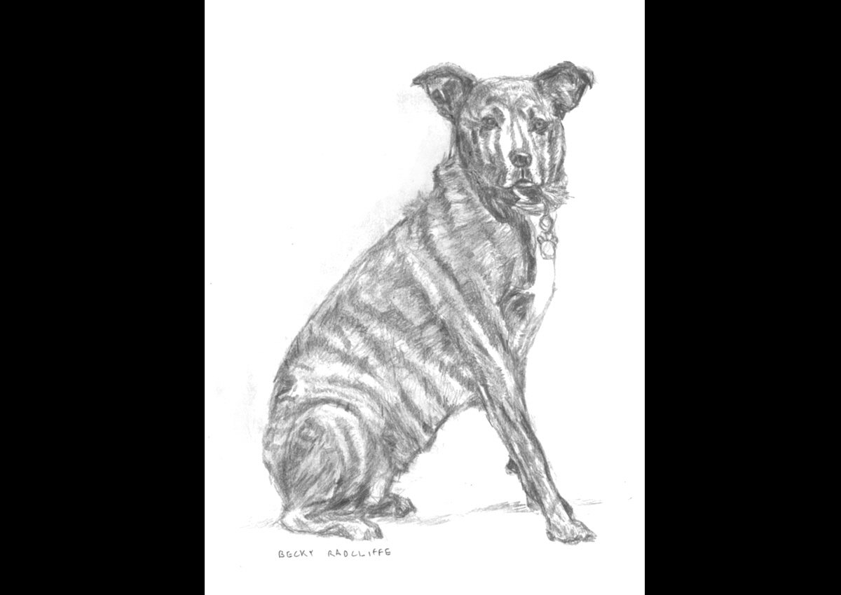 Drawing-of-dog-I-March-2012b1
