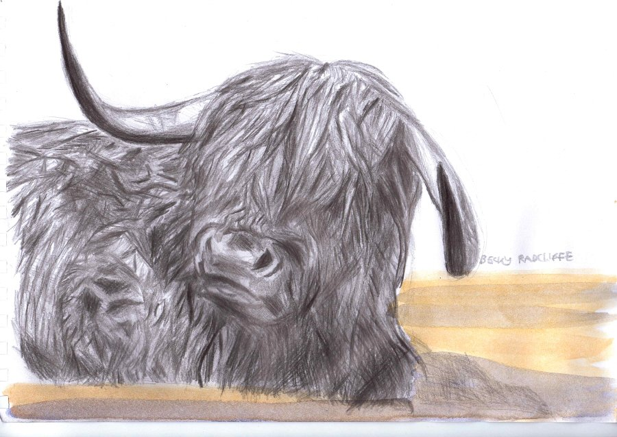 Highland-Cow-s