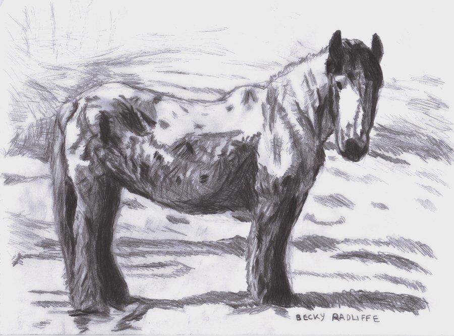 Pony-s2