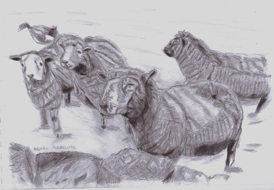 Sheep-s2